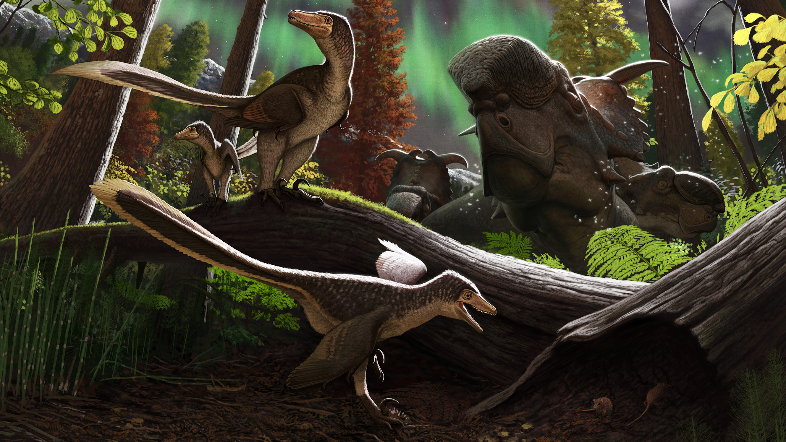 Artist's rendering of a juvenile dromaeosaurid 70 million years ago on the Prince Creek Formation in northern Alaska.